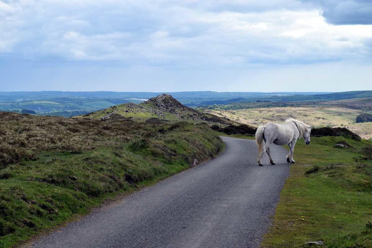 pony-on-road