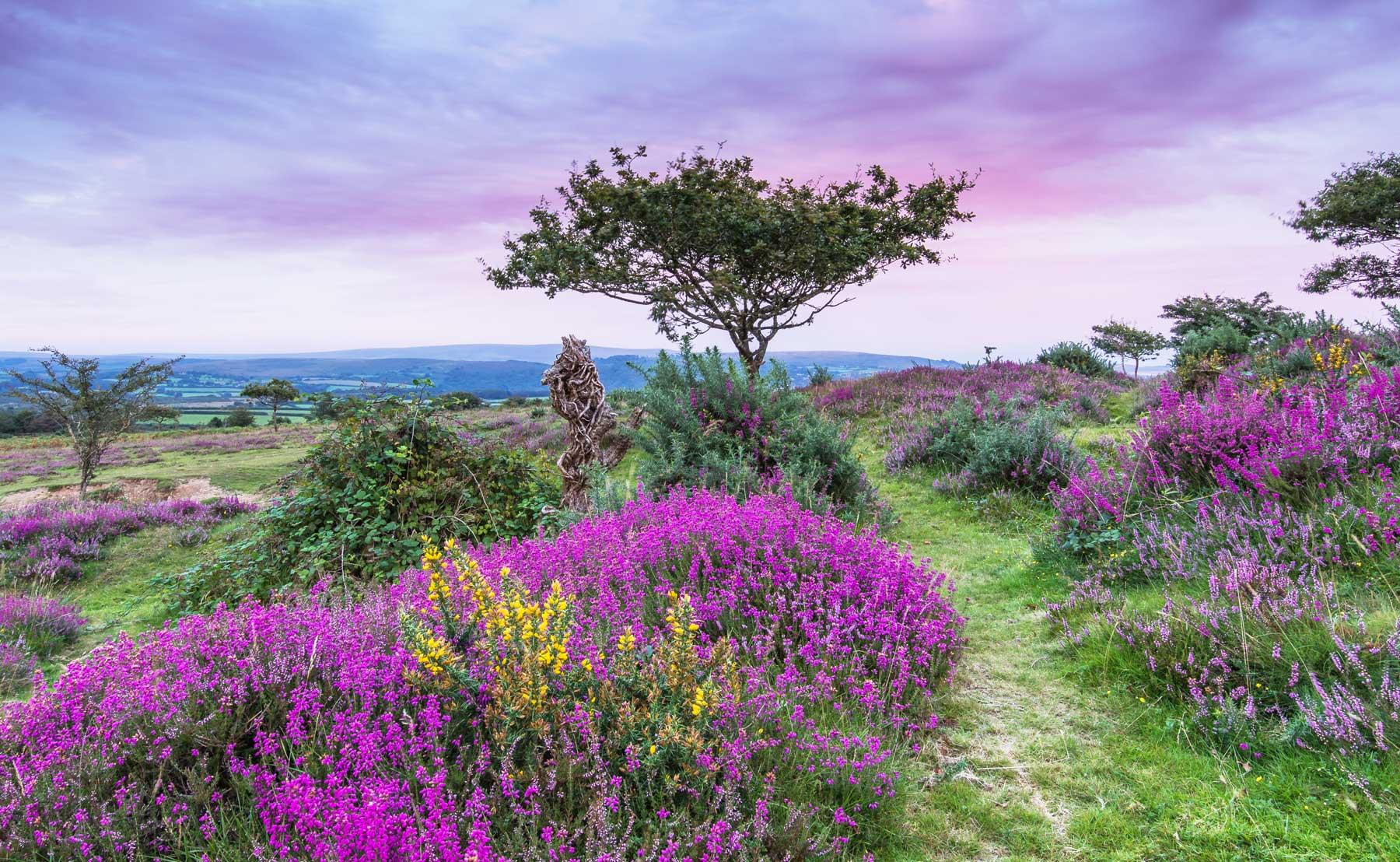 Discover Dartmoor 2021 Destination Guide