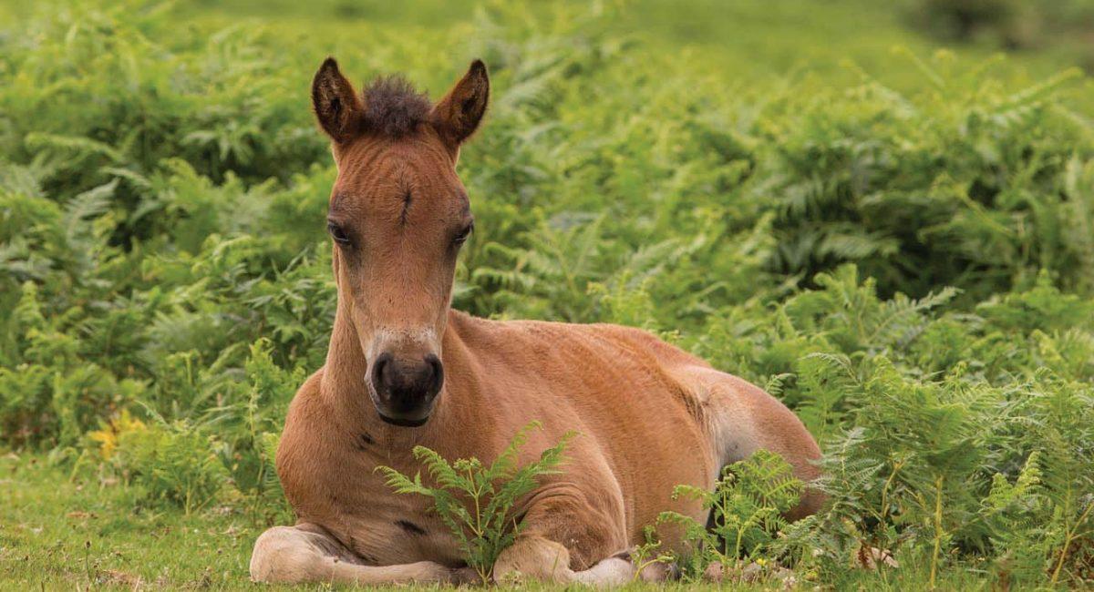 Pony-foal