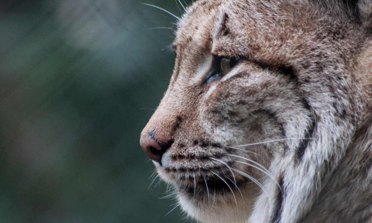 darmoor-zoo